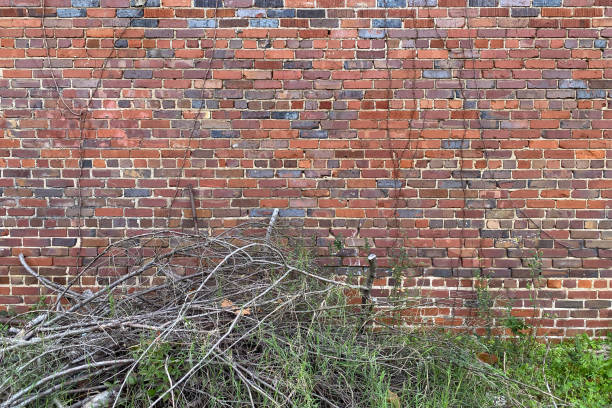 old country colorful brick garden wall overgrown stock photo