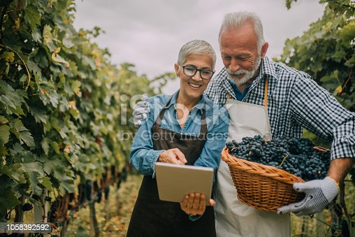 1063236916 istock photo Old couple looking at digital tablet 1058392592