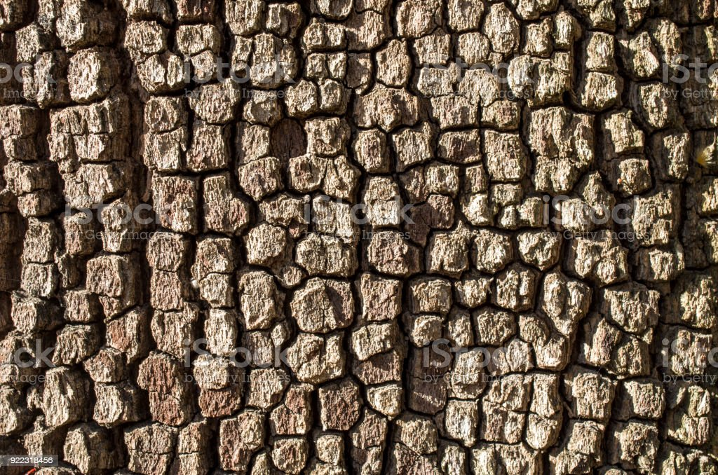 Old cracked brown bark on a tree closeup stock photo