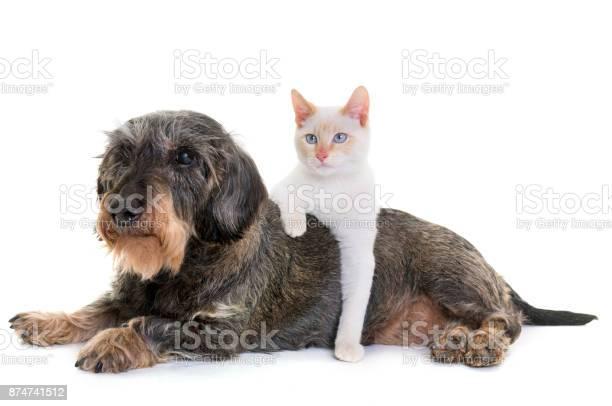 Old dachshund and kitten picture id874741512?b=1&k=6&m=874741512&s=612x612&h=w9mmchnqw ffc1cxlz5prccnororfoao7nng9a6f2e8=