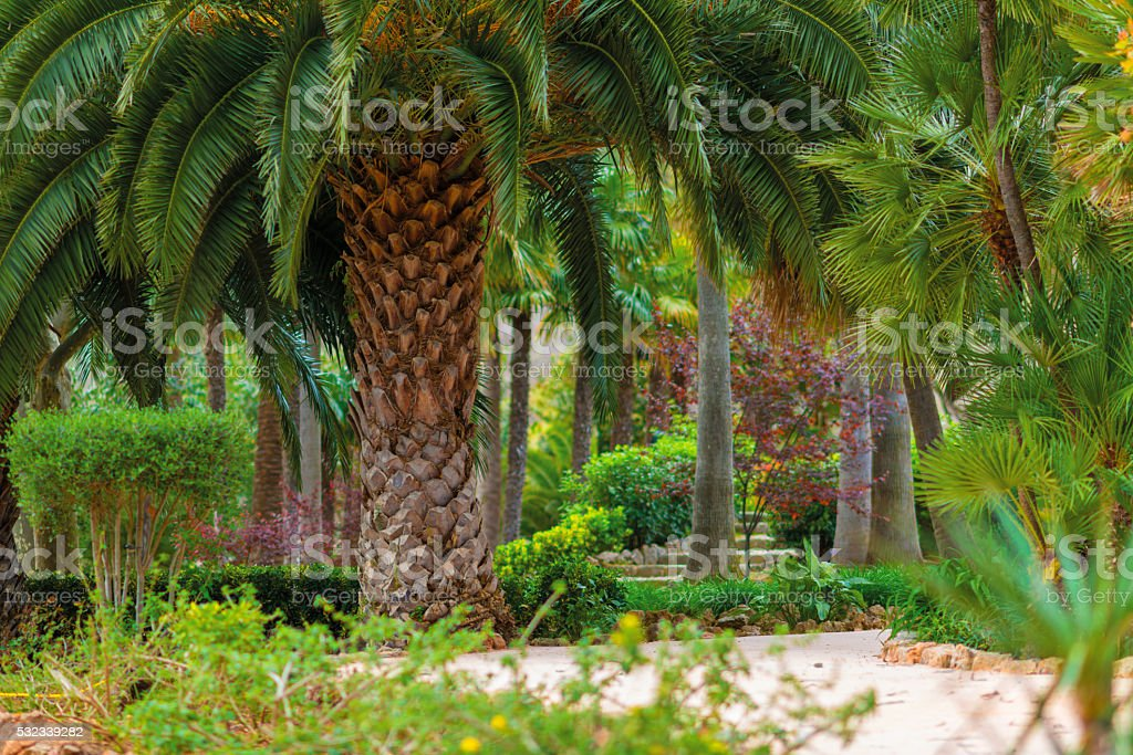 old date palm and tropical plants in a tropical garden stock photo