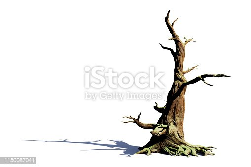 huge fairy tale style tree, cutout on white ground