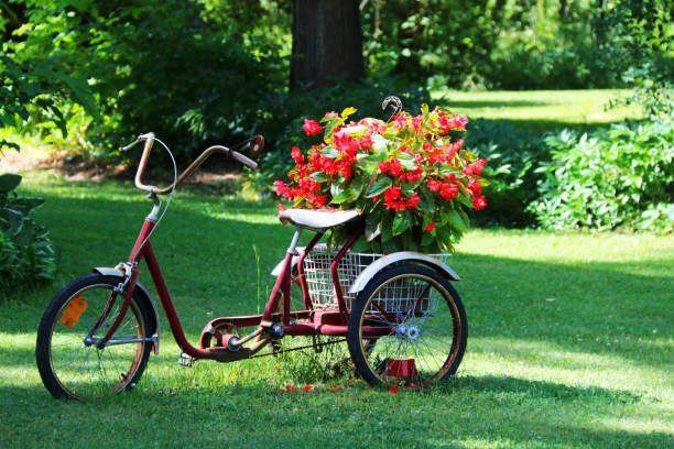 old display flower planter three wheels bicycle bike yard stock photo