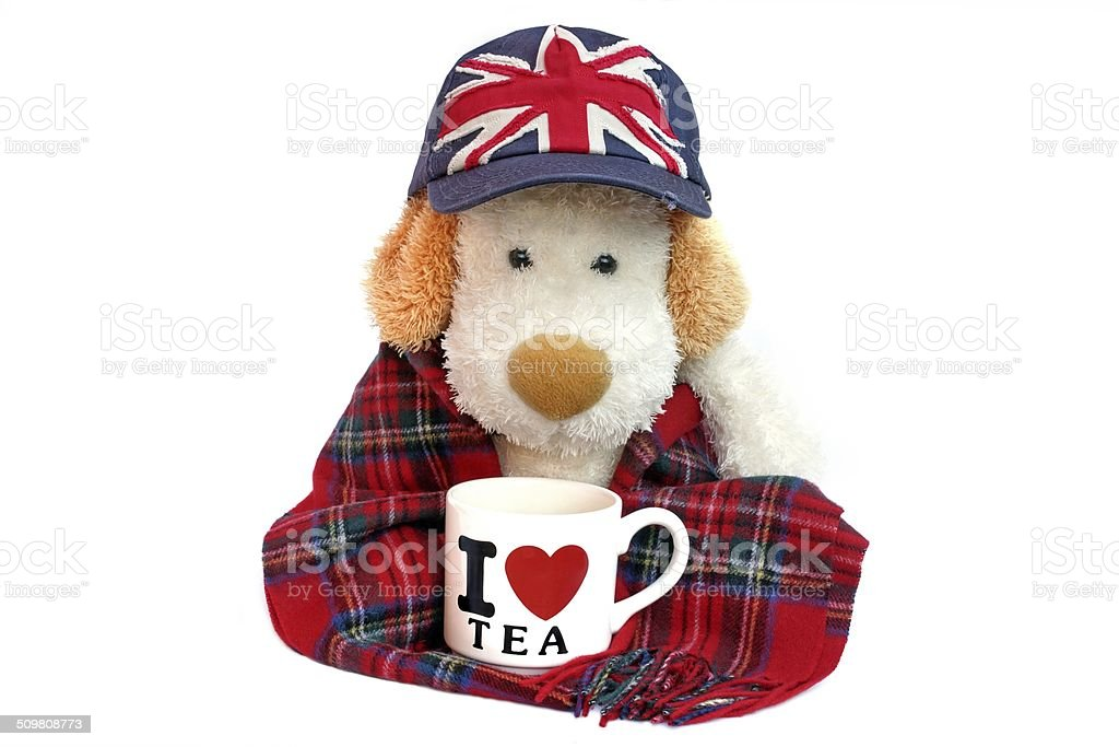 Old Dog Englishman with teacup stock photo