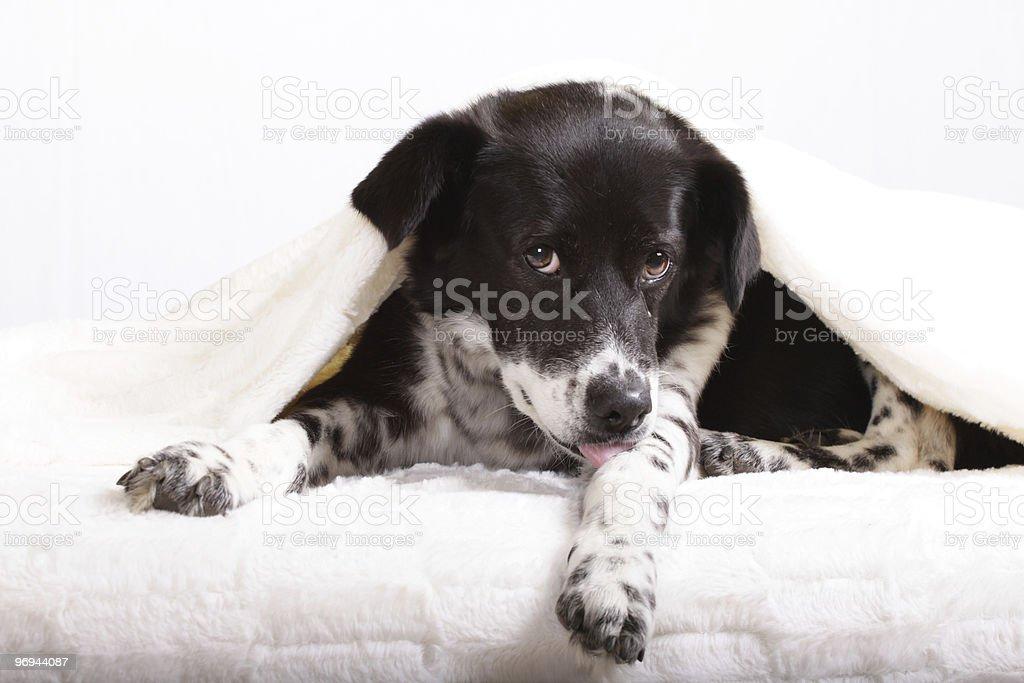 Old  Dog Lady royalty-free stock photo