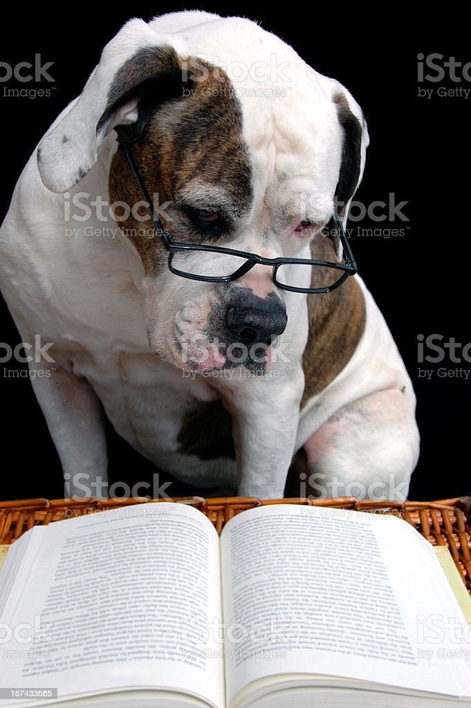 Old Dog Learning New Tricks royalty-free stock photo