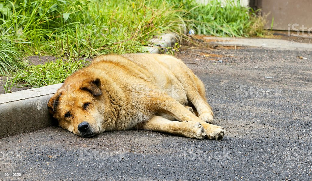 Old dog of red color - Royalty-free Dier Stockfoto