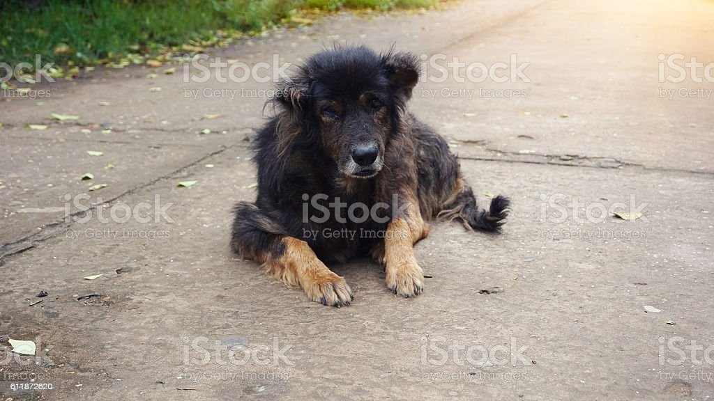 old dog on the street stock photo