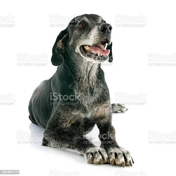 Old dog picture id501864173?b=1&k=6&m=501864173&s=612x612&h=zmsyutrxt6zmcd6npa h4d7mxu2mts4giizydhuit08=