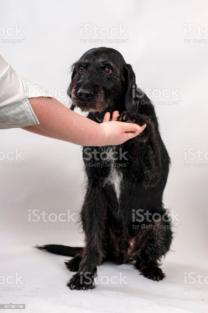 Old dog with cataracts - Royalty-free Adult Stock Photo