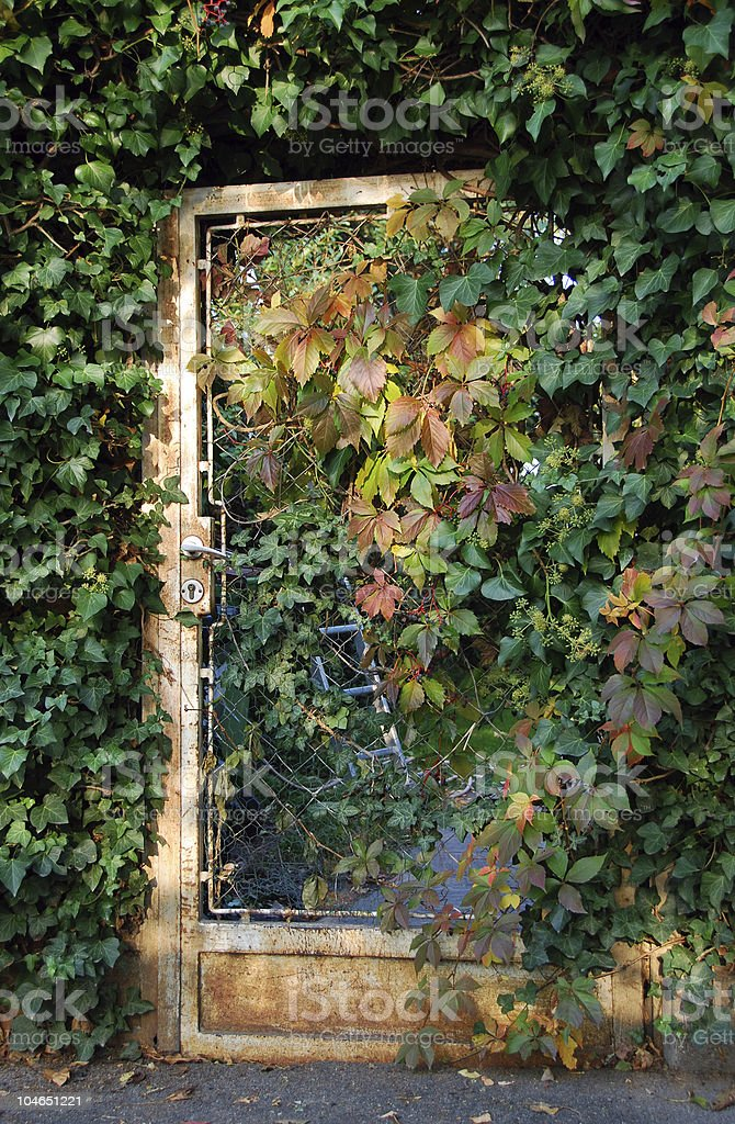 old door covered with autumn foliage royalty-free stock photo