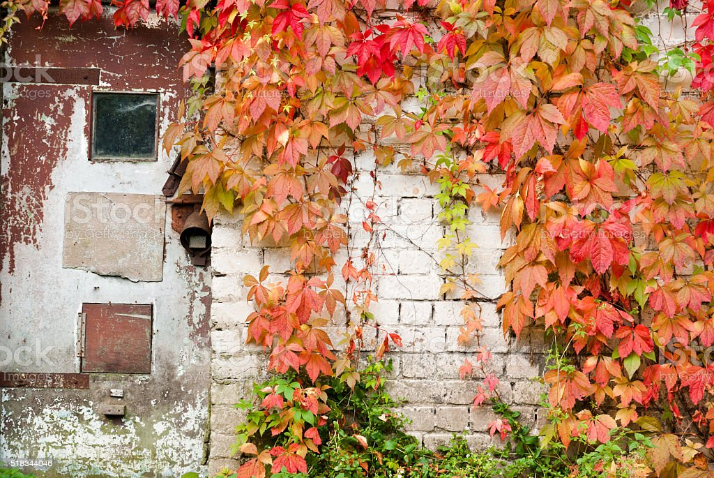 Old doors, white brick wall and autumn leaves stock photo