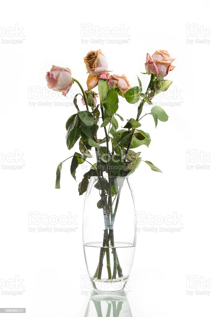 Old Dried Dead Pink Roses In A Vase Stock Photo & More Pictures of ...