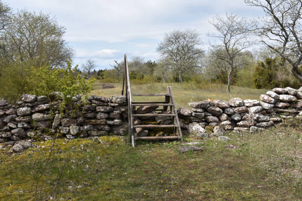 Old dry stone wall with a wooden stile in a meadow by springtime stock photo