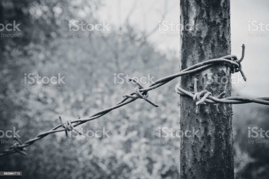 Old Electrified Fence With Barbed Wire Stock Photo & More Pictures ...