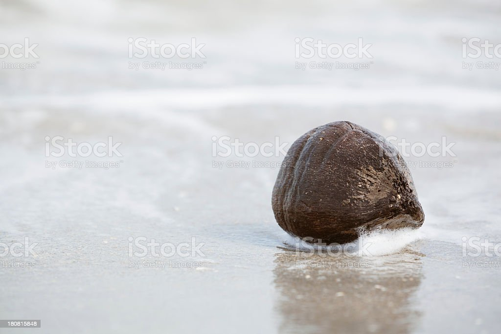 Old empty cracked coconuts on the tropical beach royalty-free stock photo