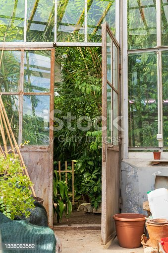 istock Old empty terracotta pots for houseplants growing outside glasshouse with different tropical plants 1338063552