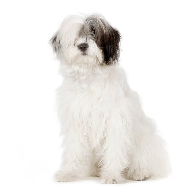 Old english sheepdog phone white surface picture id93209402?b=1&k=6&m=93209402&s=612x612&w=0&h=5x0mfzf4wpyqt0hkjvbpjyvyjcemenuoxkbafgukmxe=
