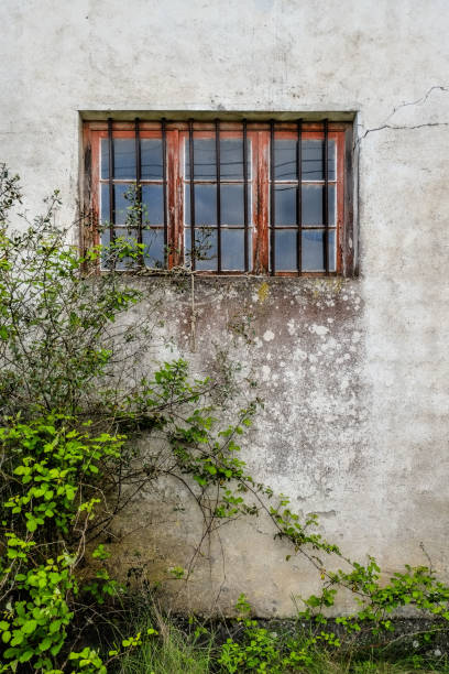 Old Facade window covered by plants stock photo