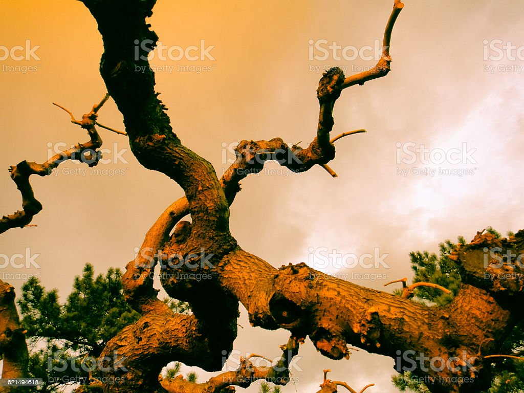 Old fairy tree at yellow-red sunset. Background, texture foto stock royalty-free