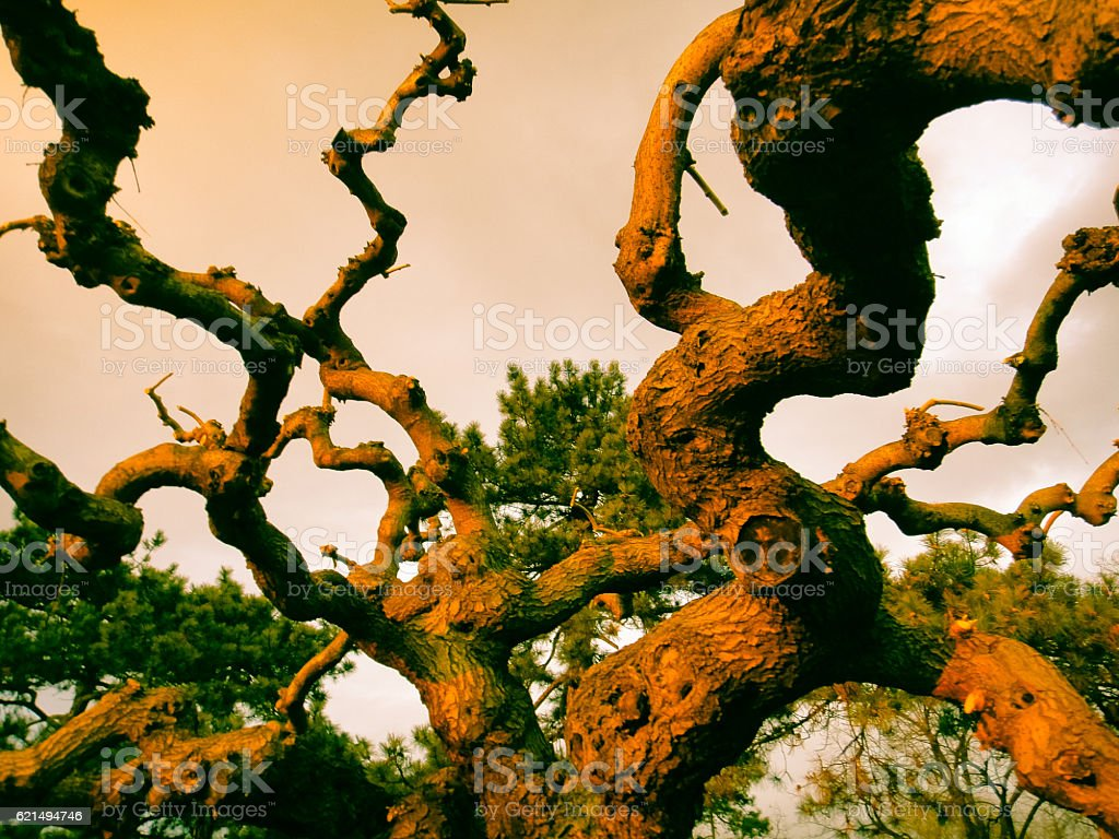 Old fairy tree at yellow-red sunset. Background, texture photo libre de droits