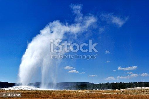 Old faithful geyser eruption at sunny blue sky, Yellowstone National Park, USA.