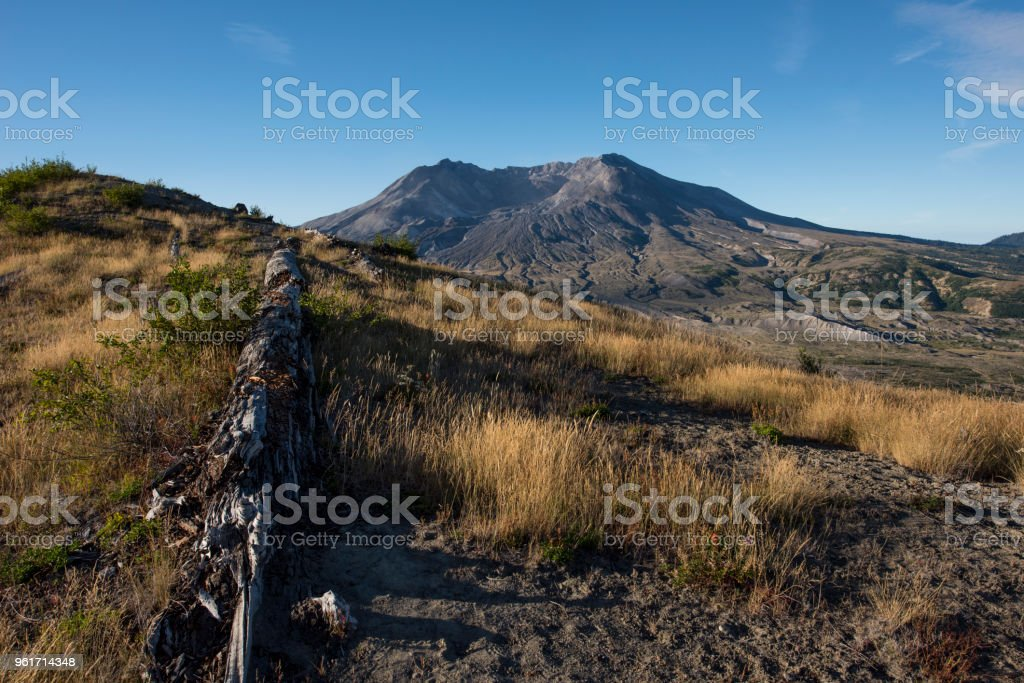 Old fallen tree from volcanic blast, Mount St Helens, Washington state stock photo