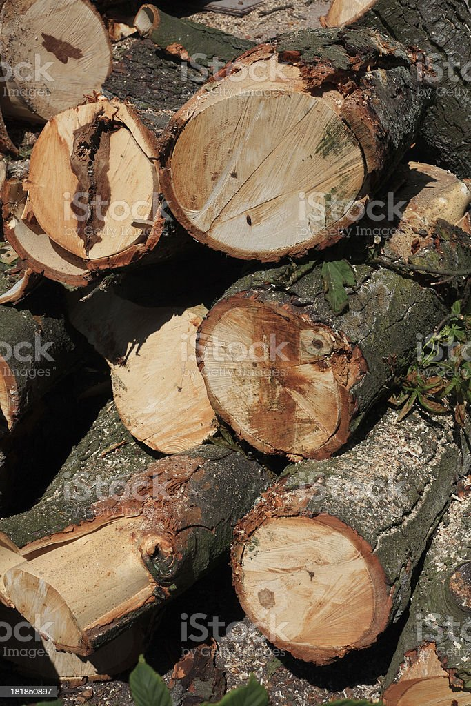 Old fallen tree royalty-free stock photo