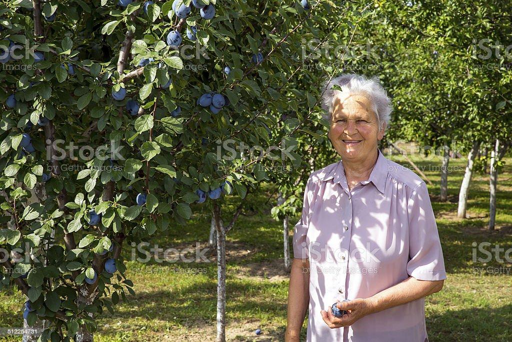 Old farmer woman stock photo