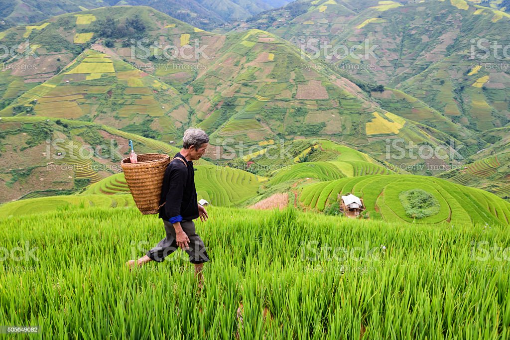 old farmer works and carries baskets on his shoulder stock photo