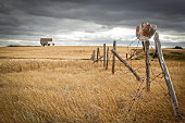 horizontal image of an old farmhouse sitting in the distance in a wheat field with an old  fence with broken posts leaning over and a cowboy hat hanging on a post under a cloudy stormy sky