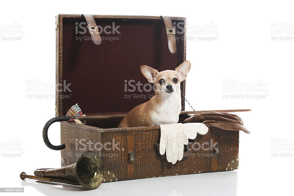 old fashioned cuteness royalty-free stock photo
