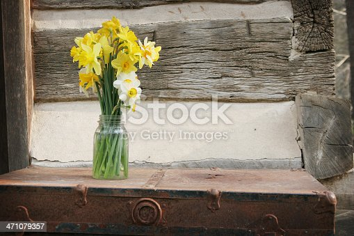 Daffodils in a jar sitting on trunk, in front of log cabin.