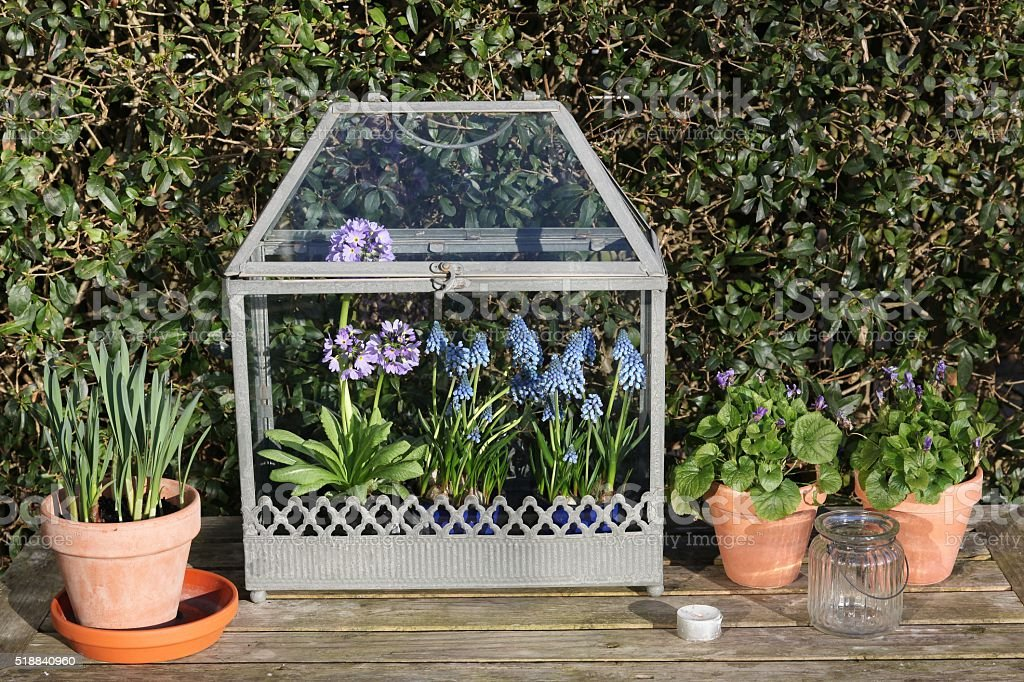 Old fashioned mini greenhouse with flowers stock photo