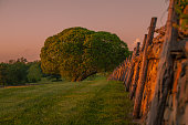 istock Old fashioned stone fence and beautiful round shaped tree 474917960