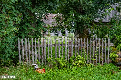 istock Old fence and a rooster 680783308