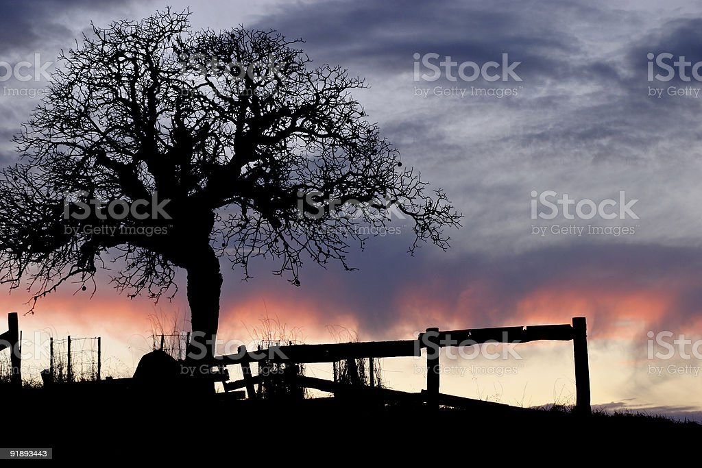 Old fence and oak tree at sunset royalty-free stock photo