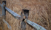 istock Old Fence in Spring 1216804329