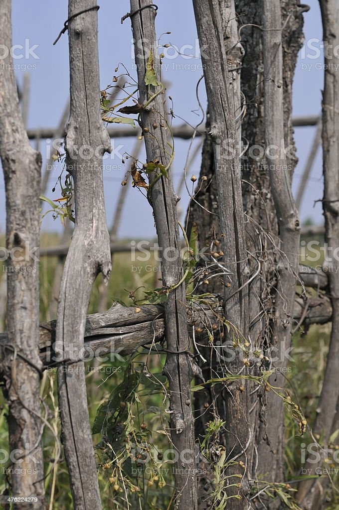 old fence of twigs royalty-free stock photo