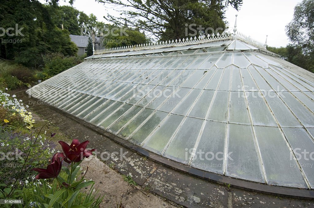 Old fernery royalty-free stock photo