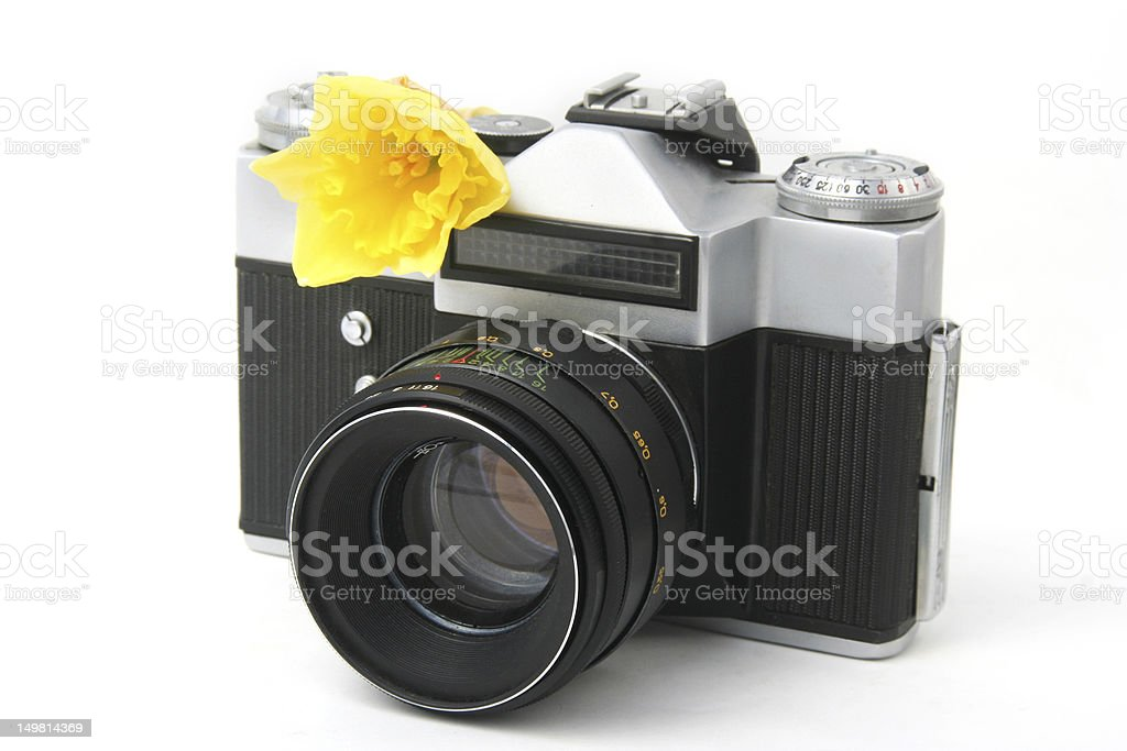 old film camera on white with yellow narcissus royalty-free stock photo