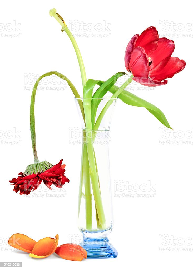 old flowers in a vase stock photo