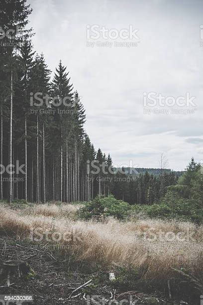 Photo of Old forest beside clear area in wilderness