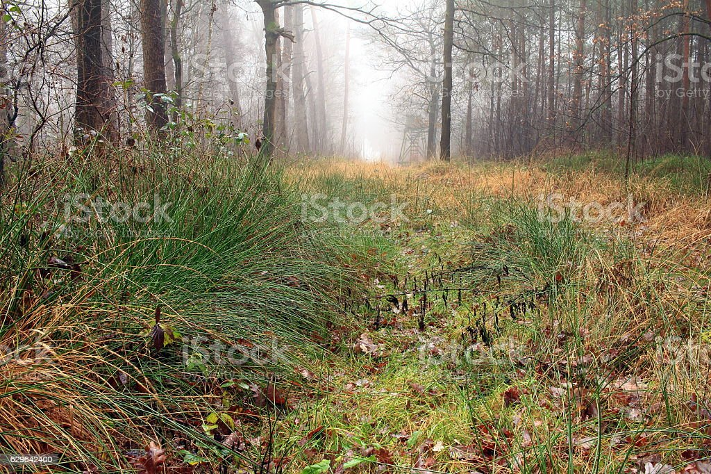 alter Waldweg stock photo