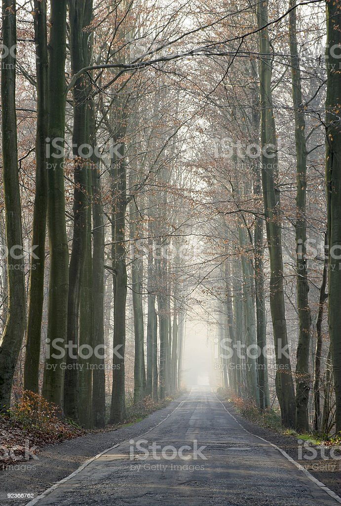 Old forest road in the winter royalty-free stock photo