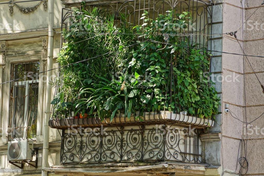 antiguo balcón gris cubierta con vegetación ornamental en macetas - foto de stock