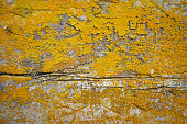 istock Old gray wooden texture background with yellow lichen 586377258