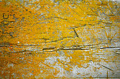 istock Old gray wooden texture background with yellow lichen 586378098