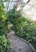 Old stock greenhouse of the Moscow Botanical Garden