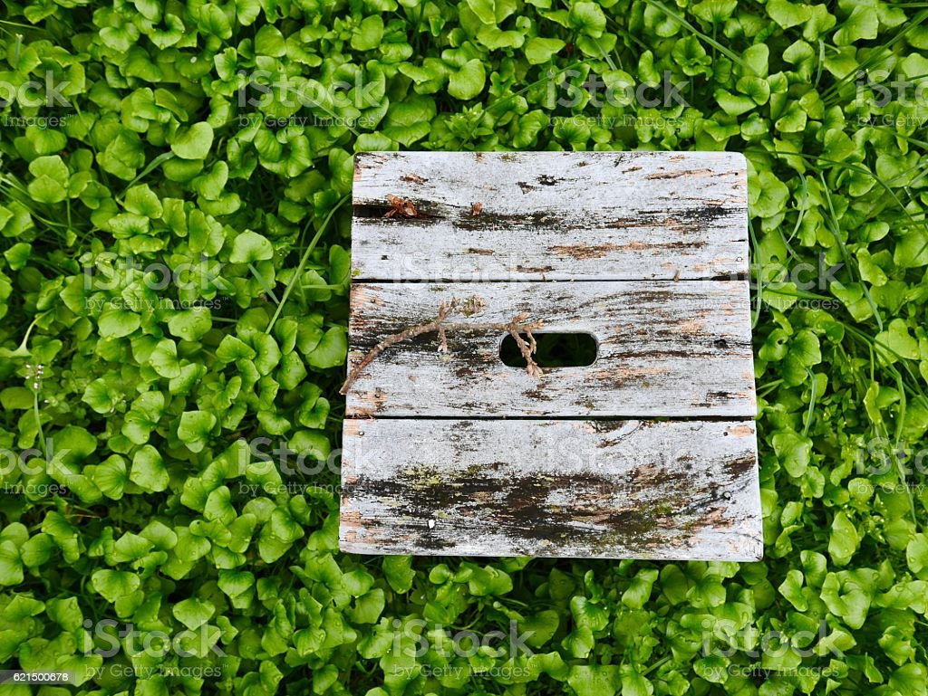 Old grey bench surrounded by masses of green weeds. Lizenzfreies stock-foto